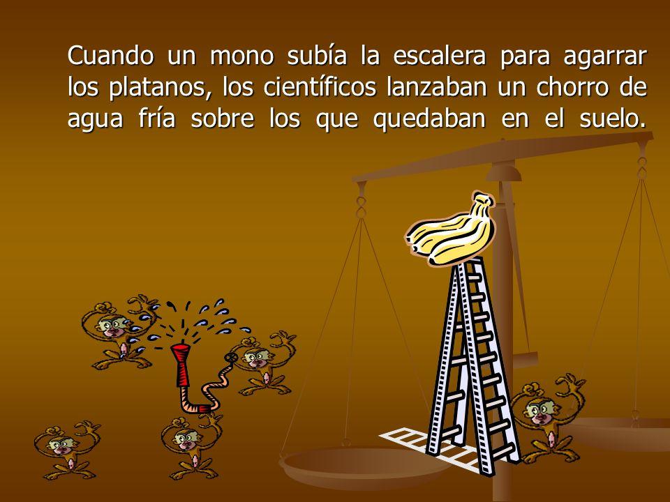 Cuando un mono subía la escalera para agarrar los platanos, los científicos lanzaban un chorro de agua fría sobre los que quedaban en el suelo.