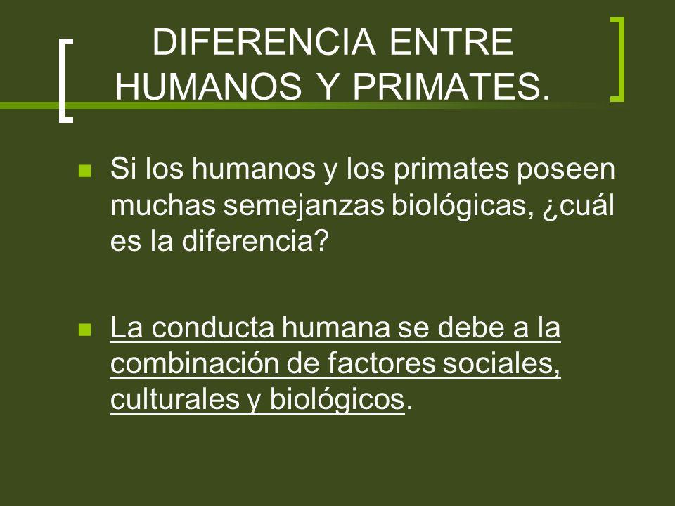 DIFERENCIA ENTRE HUMANOS Y PRIMATES. Si los humanos y los primates poseen muchas semejanzas biológicas, ¿cuál es la diferencia? La conducta humana se