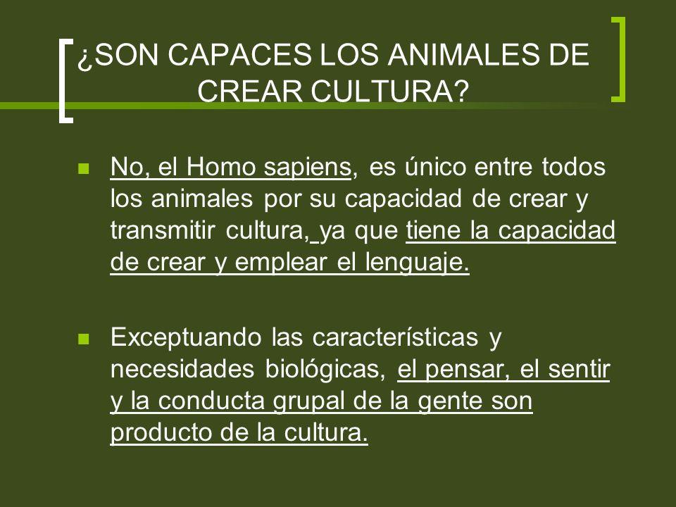 ¿SON CAPACES LOS ANIMALES DE CREAR CULTURA? No, el Homo sapiens, es único entre todos los animales por su capacidad de crear y transmitir cultura, ya