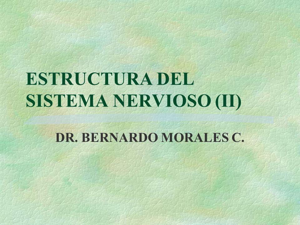 ESTRUCTURA DEL SISTEMA NERVIOSO (II) DR. BERNARDO MORALES C.