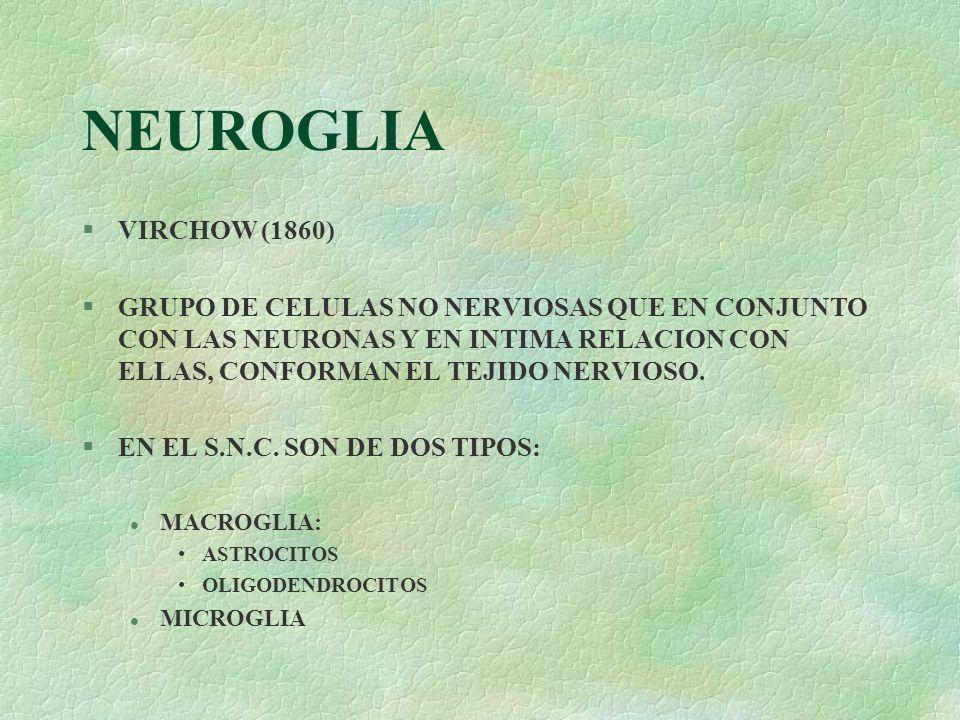 NEUROGLIA §VIRCHOW (1860) §GRUPO DE CELULAS NO NERVIOSAS QUE EN CONJUNTO CON LAS NEURONAS Y EN INTIMA RELACION CON ELLAS, CONFORMAN EL TEJIDO NERVIOSO