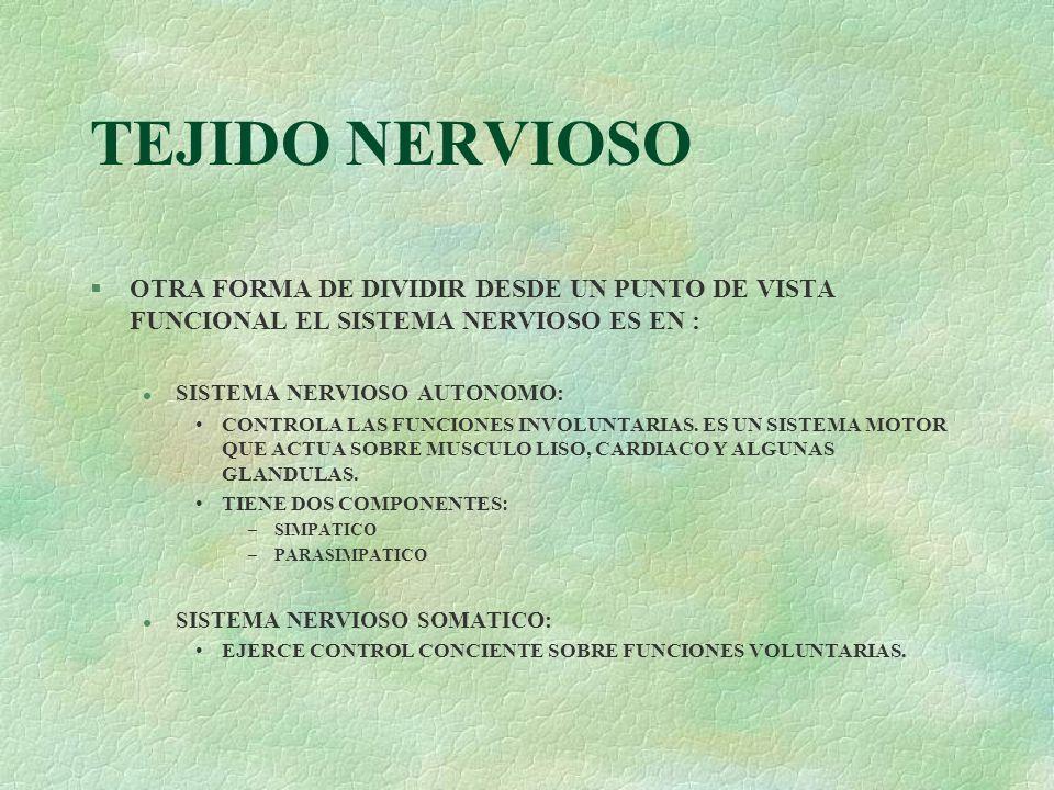TEJIDO NERVIOSO §OTRA FORMA DE DIVIDIR DESDE UN PUNTO DE VISTA FUNCIONAL EL SISTEMA NERVIOSO ES EN : l SISTEMA NERVIOSO AUTONOMO: CONTROLA LAS FUNCION