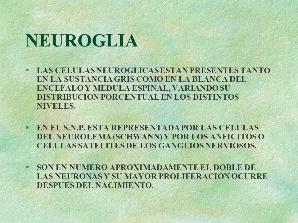 NEUROGLIA §LAS CELULAS NEUROGLICAS ESTAN PRESENTES TANTO EN LA SUSTANCIA GRIS COMO EN LA BLANCA DEL ENCEFALO Y MEDULA ESPINAL, VARIANDO SU DISTRIBUCIO