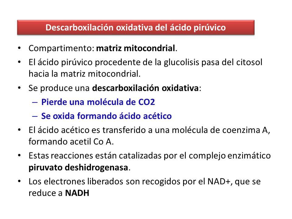 Complejo I: NADH deshidrogenasa.