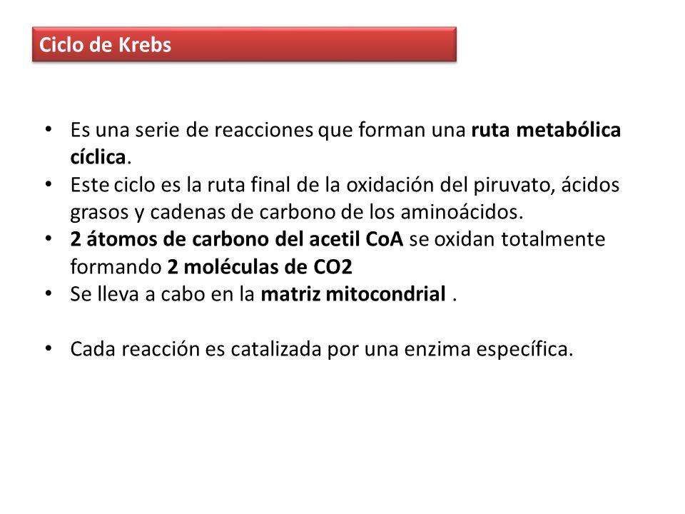 Reacciones del ciclo de krebs 1.Unión del acetil-S-CoA (2C) con el ácido oxalacético (4C) para formar el ácido cítrico (6C).