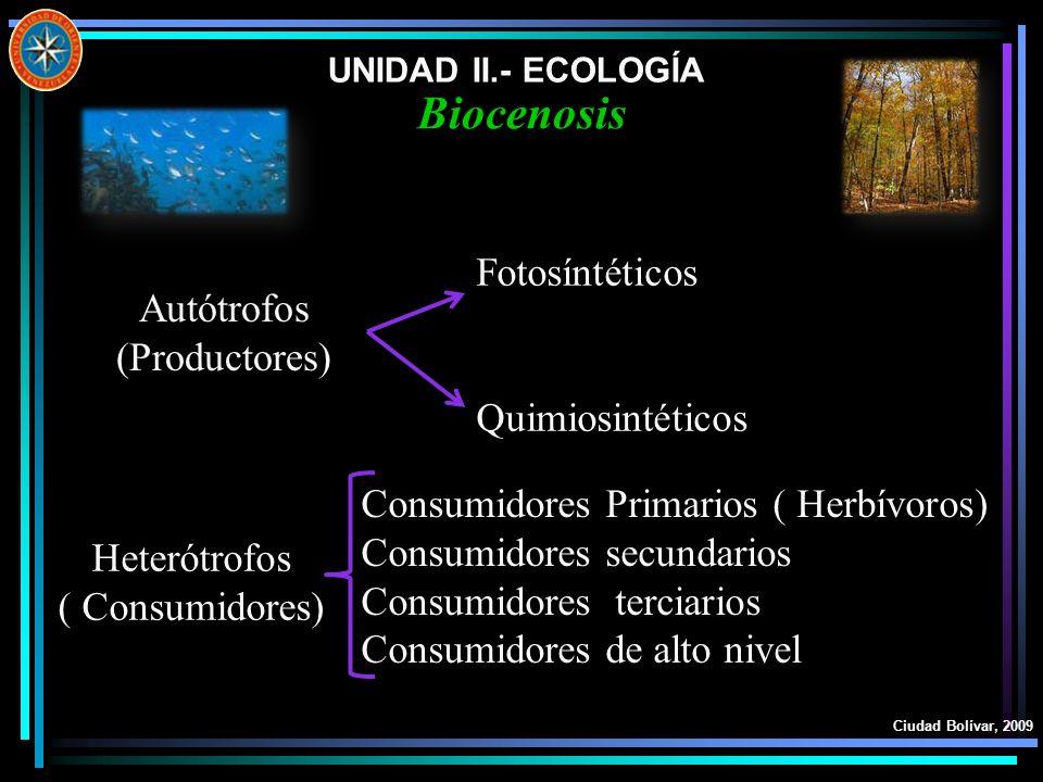 UNIDAD II.- ECOLOGÍA Ciudad Bolívar, 2009 Biocenosis Autótrofos (Productores) Heterótrofos ( Consumidores) Fotosíntéticos Quimiosintéticos Consumidore