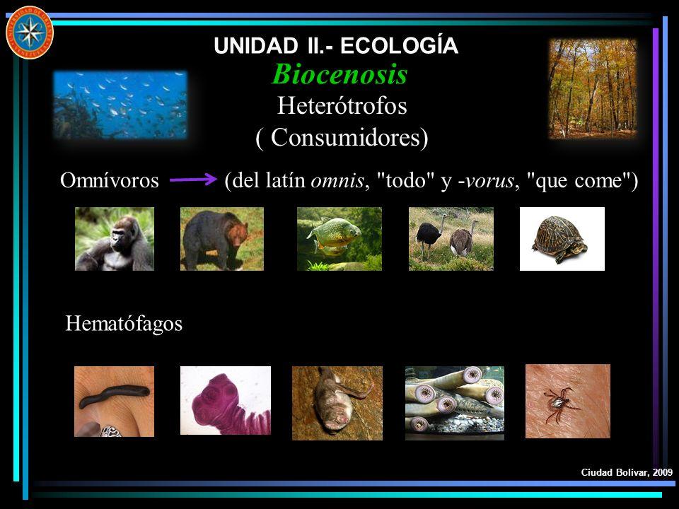UNIDAD II.- ECOLOGÍA Ciudad Bolívar, 2009 Biocenosis Heterótrofos ( Consumidores) Omnívoros(del latín omnis,