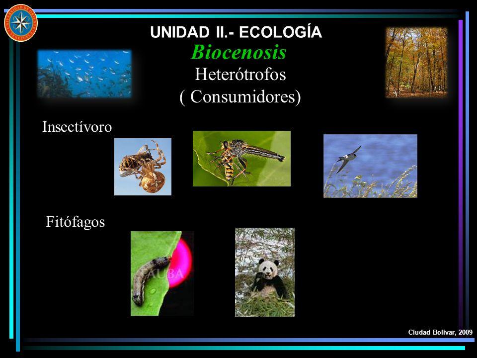 UNIDAD II.- ECOLOGÍA Ciudad Bolívar, 2009 Biocenosis Heterótrofos ( Consumidores) Insectívoro Fitófagos
