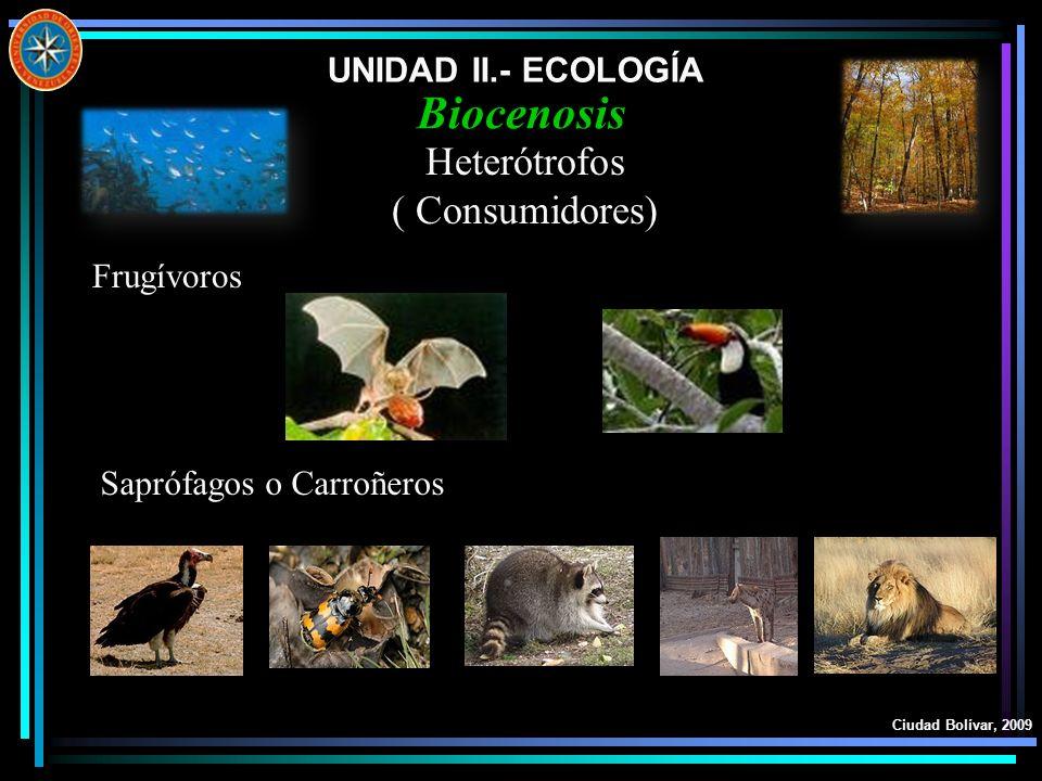 UNIDAD II.- ECOLOGÍA Ciudad Bolívar, 2009 Biocenosis Heterótrofos ( Consumidores) Frugívoros Saprófagos o Carroñeros