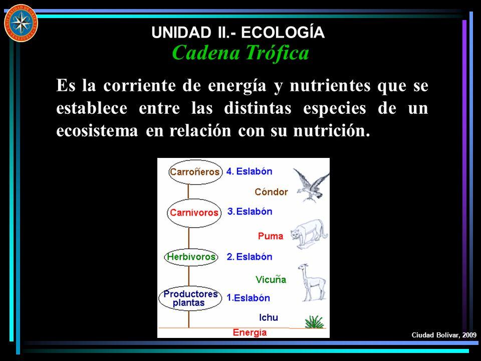 UNIDAD II.- ECOLOGÍA Ciudad Bolívar, 2009 Cadena Trófica Es la corriente de energía y nutrientes que se establece entre las distintas especies de un e
