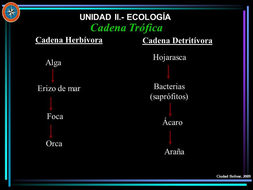 UNIDAD II.- ECOLOGÍA Ciudad Bolívar, 2009 Cadena Trófica Cadena Herbívora Alga Erizo de mar Foca Orca Cadena Detritívora Hojarasca Bacterias (saprófit