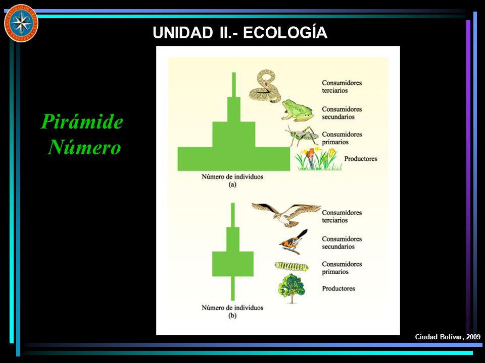 UNIDAD II.- ECOLOGÍA Ciudad Bolívar, 2009 Pirámide Número
