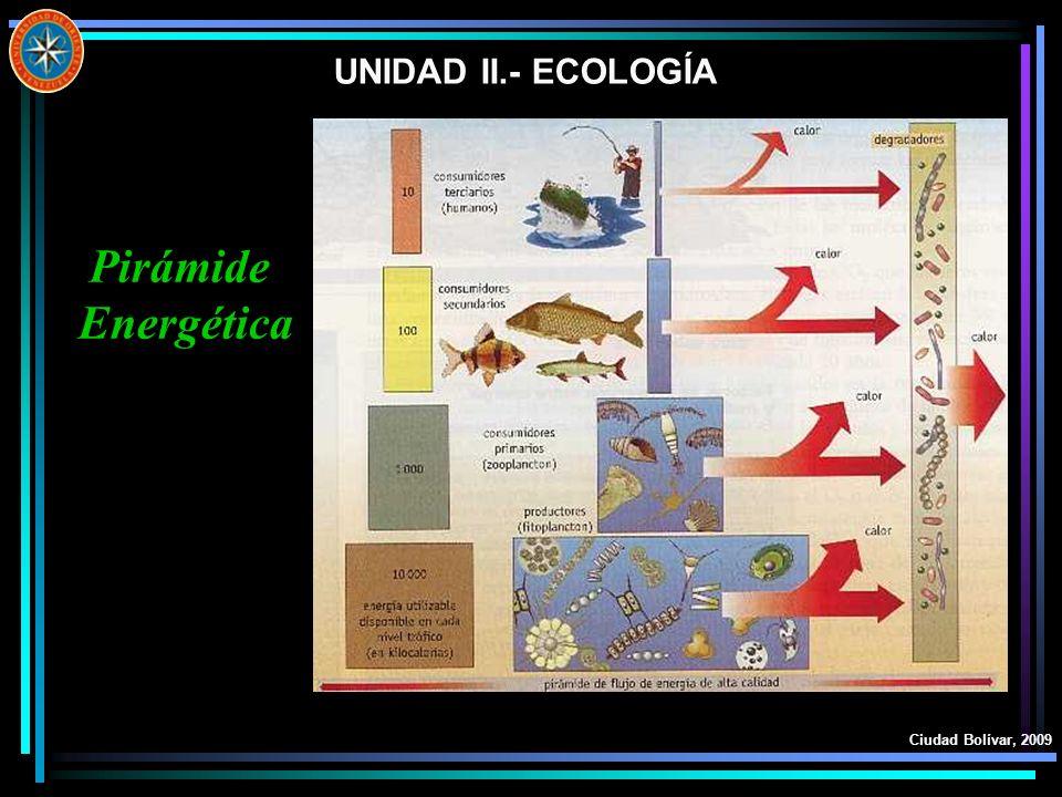 UNIDAD II.- ECOLOGÍA Ciudad Bolívar, 2009 Pirámide Energética
