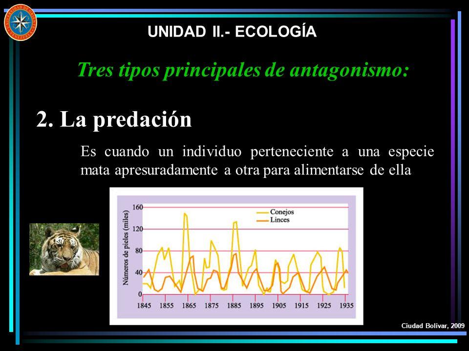 UNIDAD II.- ECOLOGÍA Ciudad Bolívar, 2009 2. La predación Es cuando un individuo perteneciente a una especie mata apresuradamente a otra para alimenta