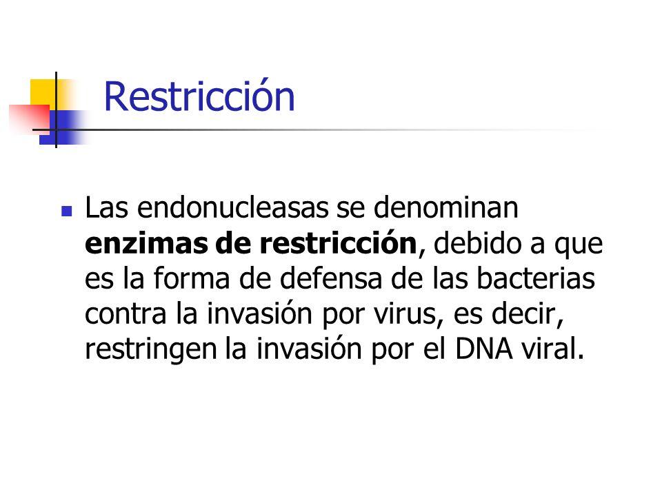 Restricción Las endonucleasas se denominan enzimas de restricción, debido a que es la forma de defensa de las bacterias contra la invasión por virus,