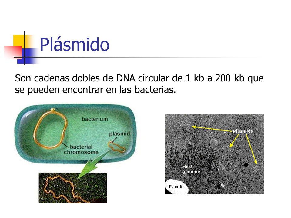 Plásmido Son cadenas dobles de DNA circular de 1 kb a 200 kb que se pueden encontrar en las bacterias.