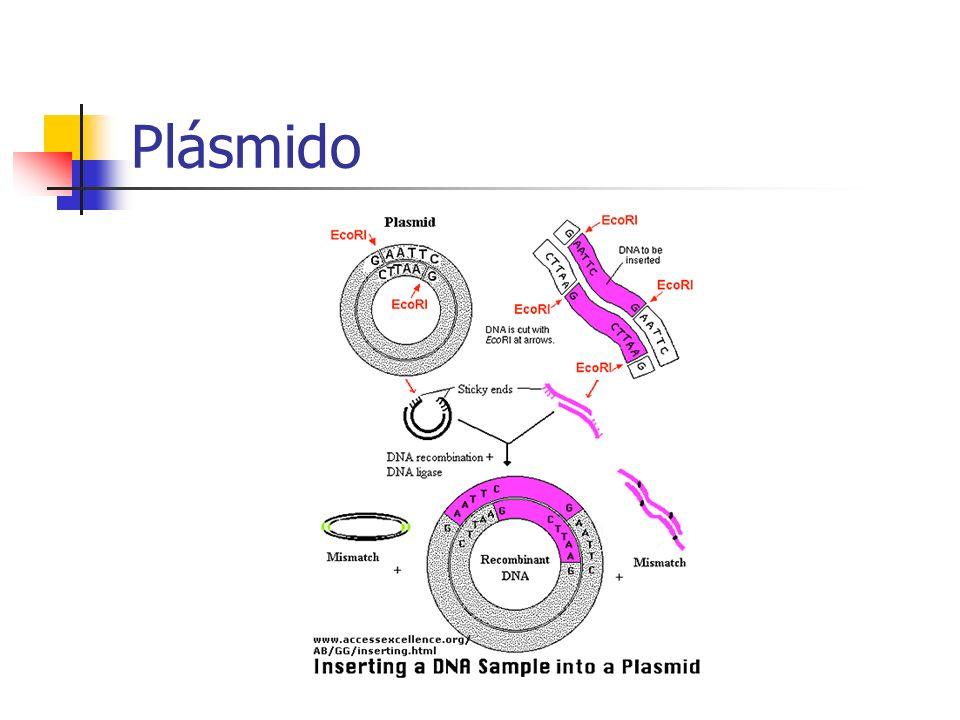 Plásmido