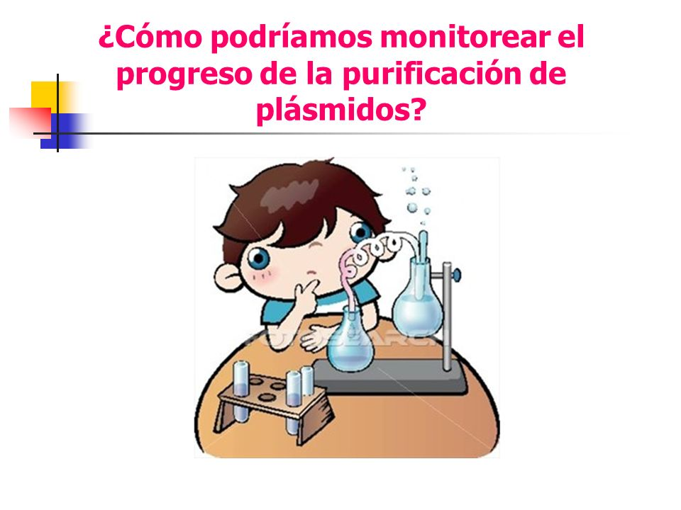 ¿Cómo podríamos monitorear el progreso de la purificación de plásmidos?
