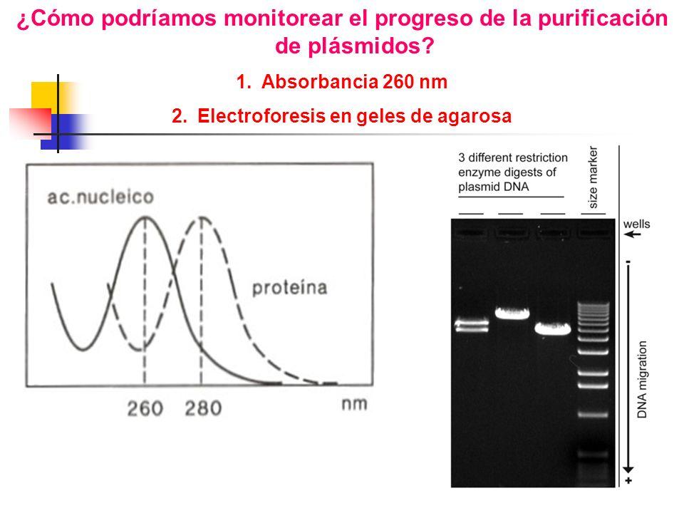 1.Absorbancia 260 nm 2.Electroforesis en geles de agarosa
