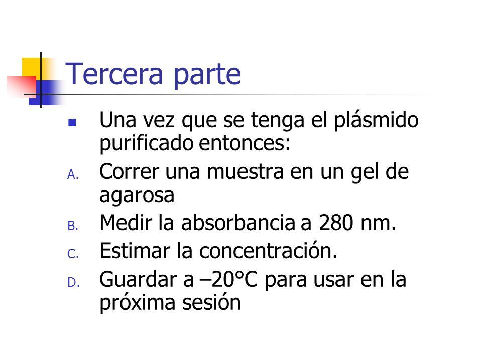 Tercera parte Una vez que se tenga el plásmido purificado entonces: A. Correr una muestra en un gel de agarosa B. Medir la absorbancia a 280 nm. C. Es