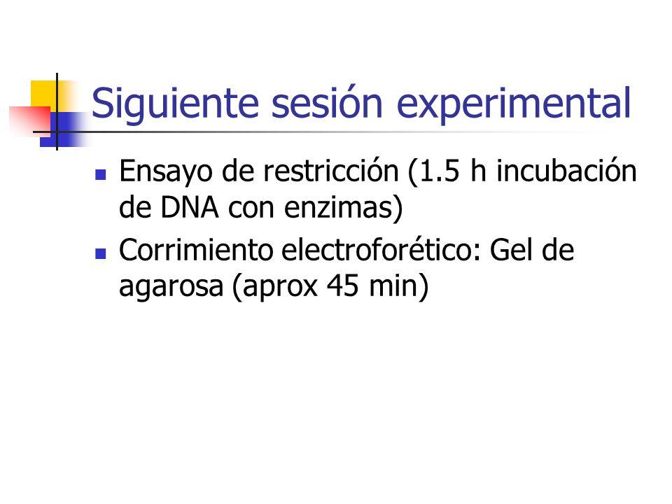 Siguiente sesión experimental Ensayo de restricción (1.5 h incubación de DNA con enzimas) Corrimiento electroforético: Gel de agarosa (aprox 45 min)