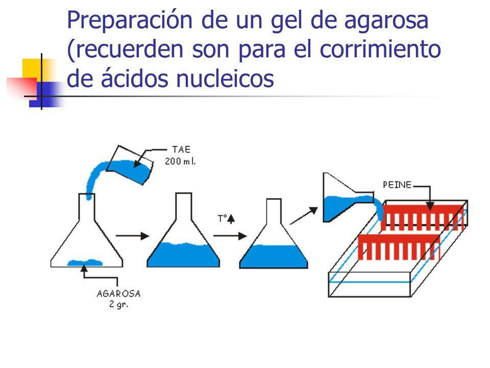 Preparación de un gel de agarosa (recuerden son para el corrimiento de ácidos nucleicos