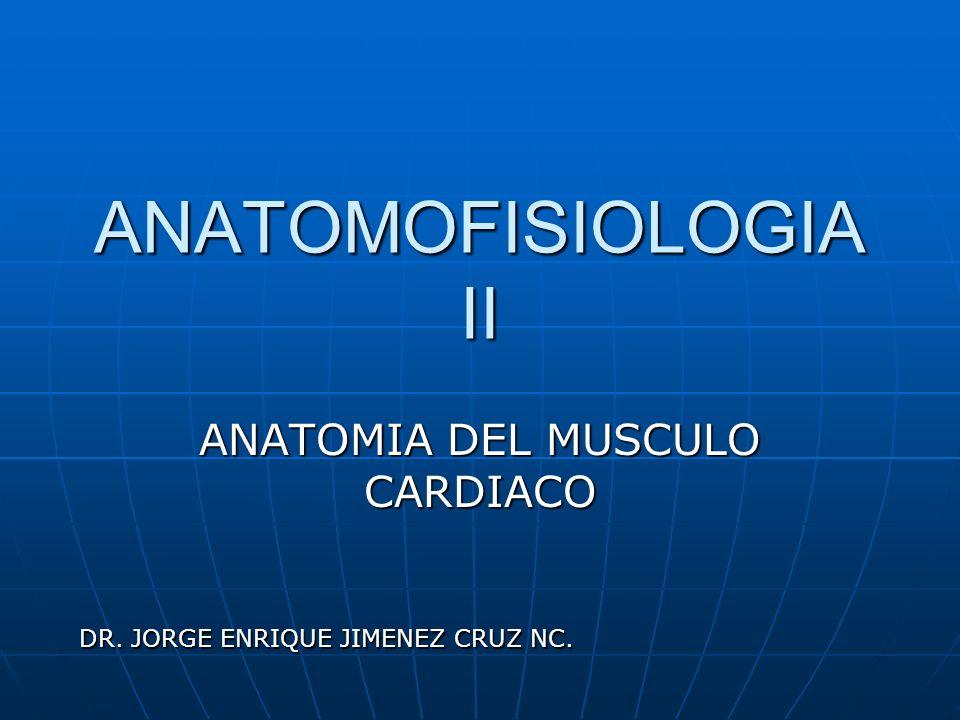ANATOMOFISIOLOGIA II ANATOMIA DEL MUSCULO CARDIACO DR. JORGE ENRIQUE JIMENEZ CRUZ NC.