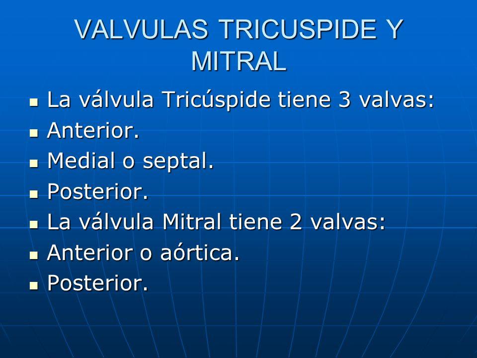 VALVULAS TRICUSPIDE Y MITRAL La válvula Tricúspide tiene 3 valvas: La válvula Tricúspide tiene 3 valvas: Anterior. Anterior. Medial o septal. Medial o