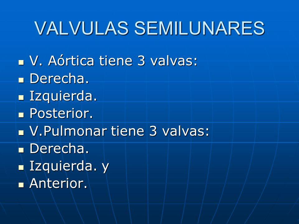 VALVULAS SEMILUNARES V. Aórtica tiene 3 valvas: V. Aórtica tiene 3 valvas: Derecha. Derecha. Izquierda. Izquierda. Posterior. Posterior. V.Pulmonar ti