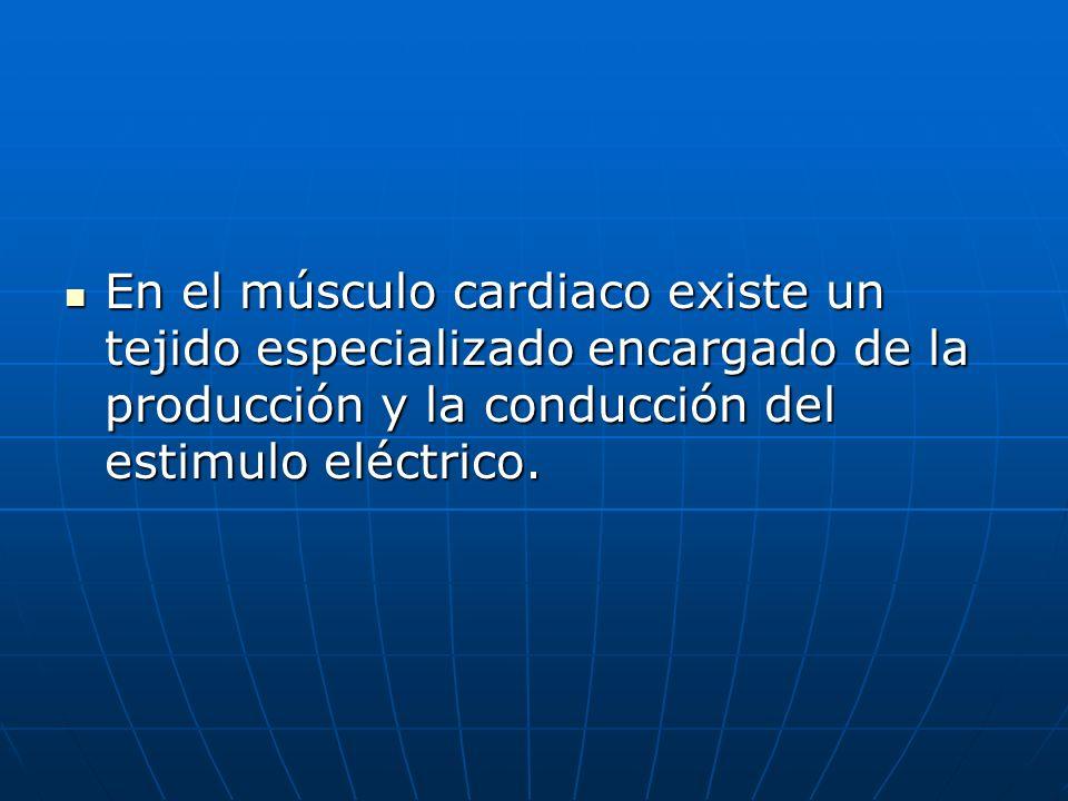 En el músculo cardiaco existe un tejido especializado encargado de la producción y la conducción del estimulo eléctrico. En el músculo cardiaco existe