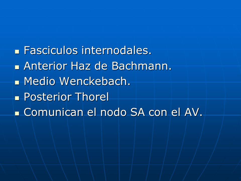 Fasciculos internodales. Fasciculos internodales. Anterior Haz de Bachmann. Anterior Haz de Bachmann. Medio Wenckebach. Medio Wenckebach. Posterior Th