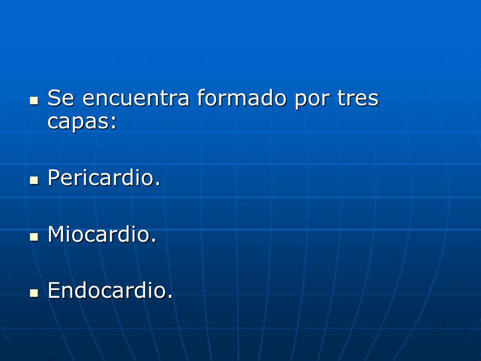 Se encuentra formado por tres capas: Se encuentra formado por tres capas: Pericardio. Pericardio. Miocardio. Miocardio. Endocardio. Endocardio.