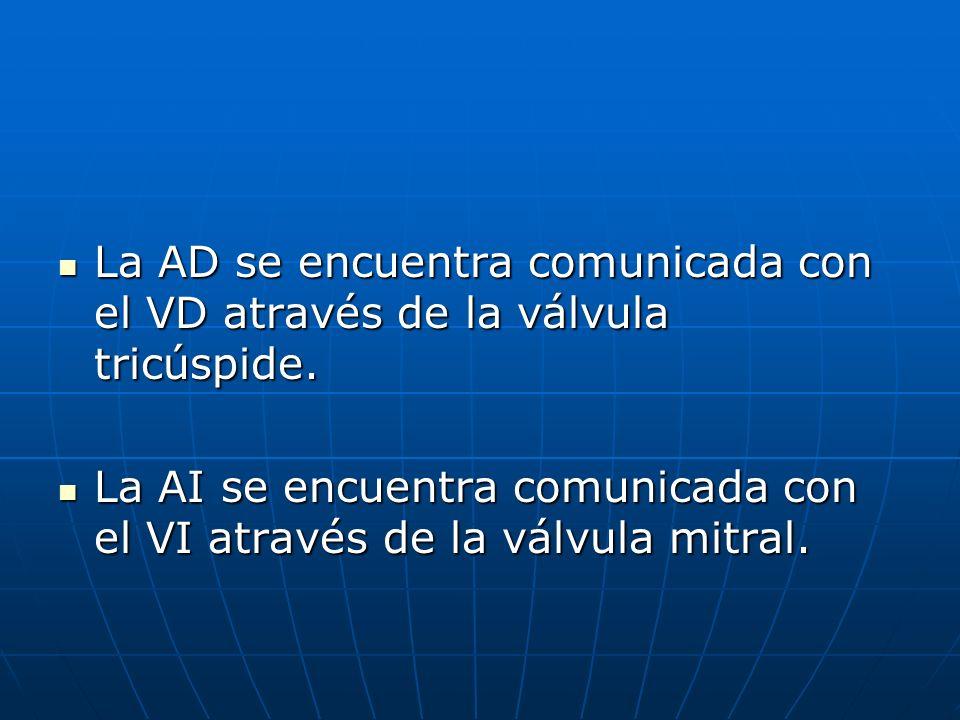La AD se encuentra comunicada con el VD através de la válvula tricúspide. La AD se encuentra comunicada con el VD através de la válvula tricúspide. La