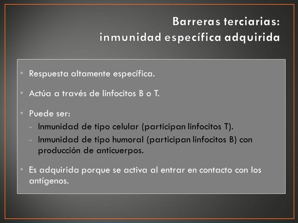 Respuesta altamente específica. Actúa a través de linfocitos B o T. Puede ser: -Inmunidad de tipo celular (participan linfocitos T). -Inmunidad de tip
