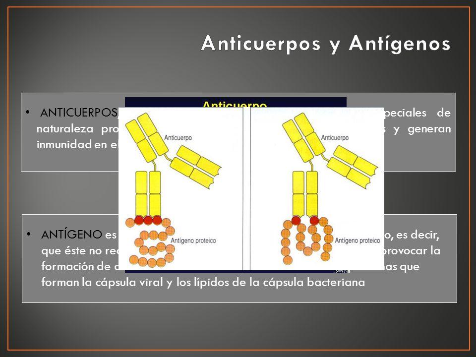 ANTICUERPOS, o inmunoglobulinas, son macromoléculas especiales de naturaleza proteica que neutralizan a los agentes patógenos y generan inmunidad en e