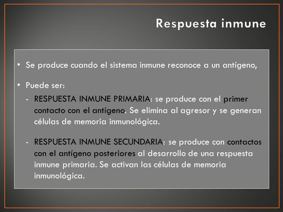 Se produce cuando el sistema inmune reconoce a un antígeno, Puede ser: -RESPUESTA INMUNE PRIMARIA: se produce con el primer contacto con el antígeno.