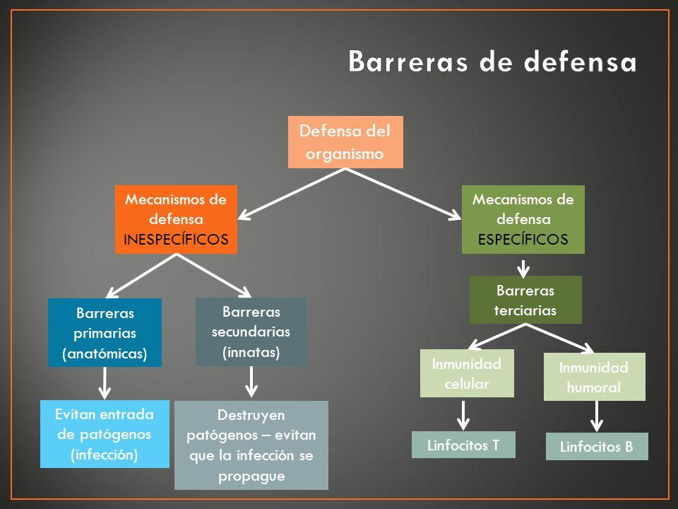 Defensa del organismo Barreras terciarias Mecanismos de defensa ESPECÍFICOS Barreras secundarias (innatas) Barreras primarias (anatómicas) Mecanismos