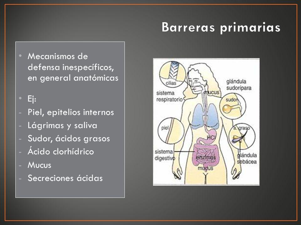 Mecanismos de defensa inespecíficos, en general anatómicas Ej: -Piel, epitelios internos -Lágrimas y saliva -Sudor, ácidos grasos -Ácido clorhídrico -