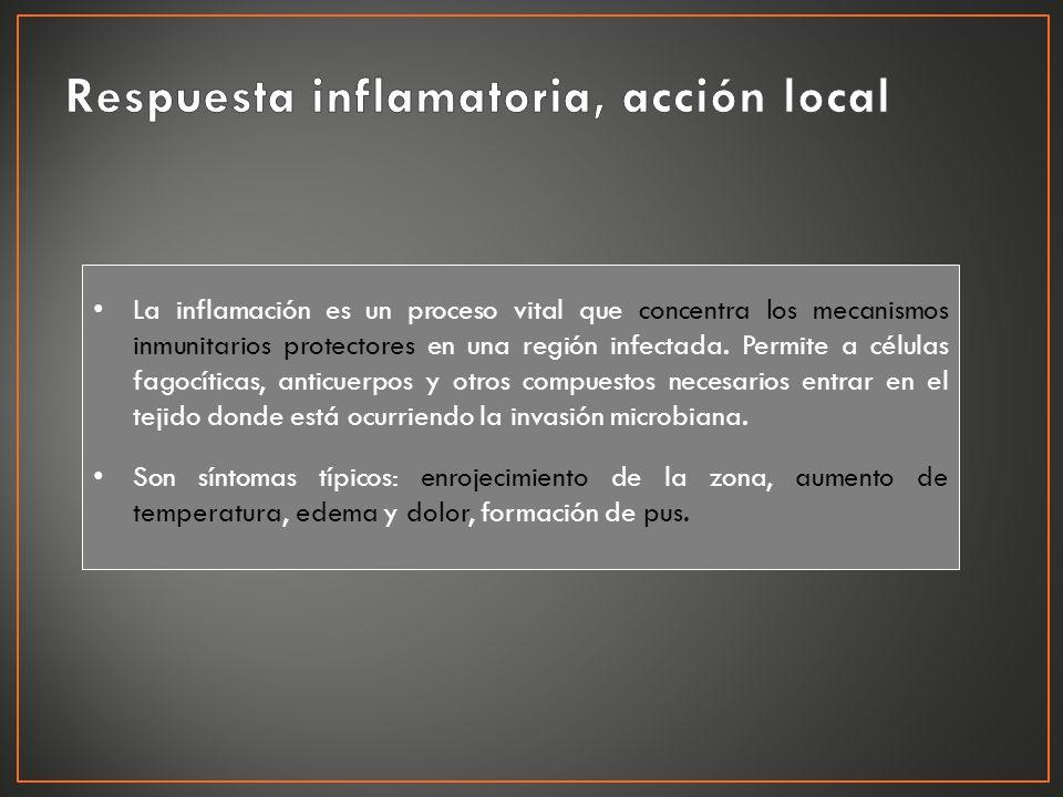 La inflamación es un proceso vital que concentra los mecanismos inmunitarios protectores en una región infectada. Permite a células fagocíticas, antic