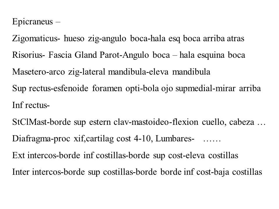 Ischiocavernoso: isquion-sinf pubis – endurecer pene/clitoris Esfinter uretral Ext-isquion-pubis-uretra – cerrar uretra comprimir..
