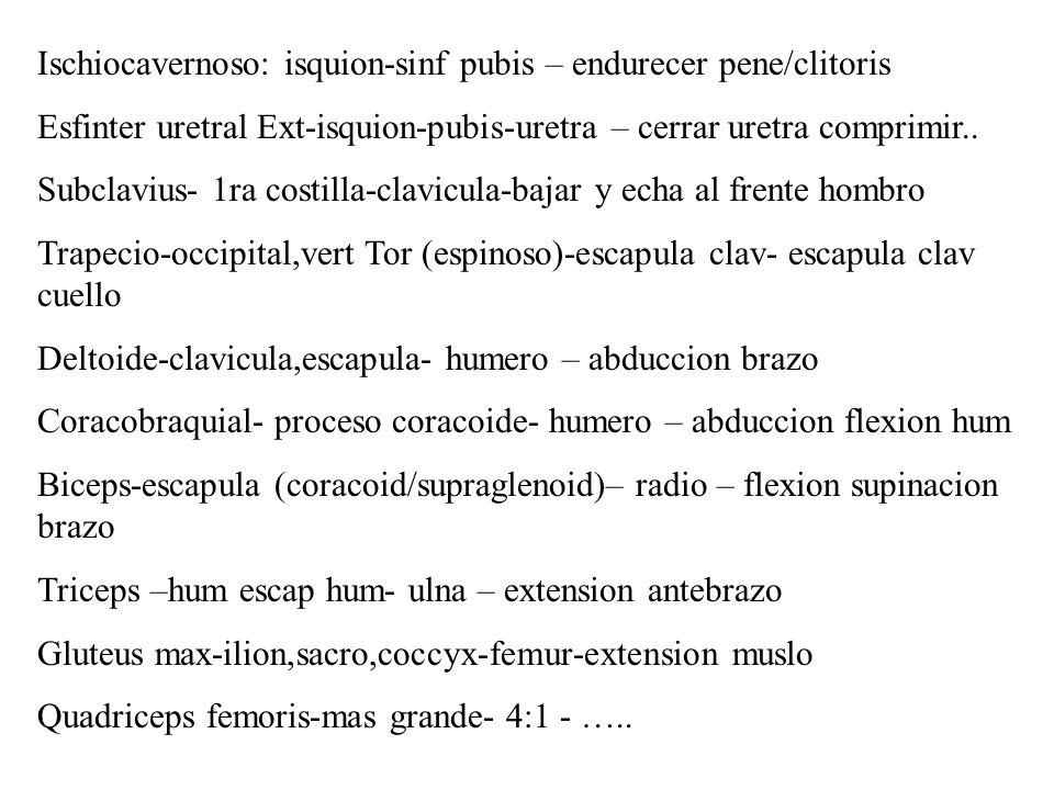 Sartorius: ilion-tibia-flexion pierna, rotar muslo Biceps femoris-isquion y femur-fibula y tibia-flexion pierna, extension y adduccion muslo Gastrocnemius-femur- calcaneo-flexion plantar… Popliteus- femur – tibia- rotacion medial tibia o lateral femur
