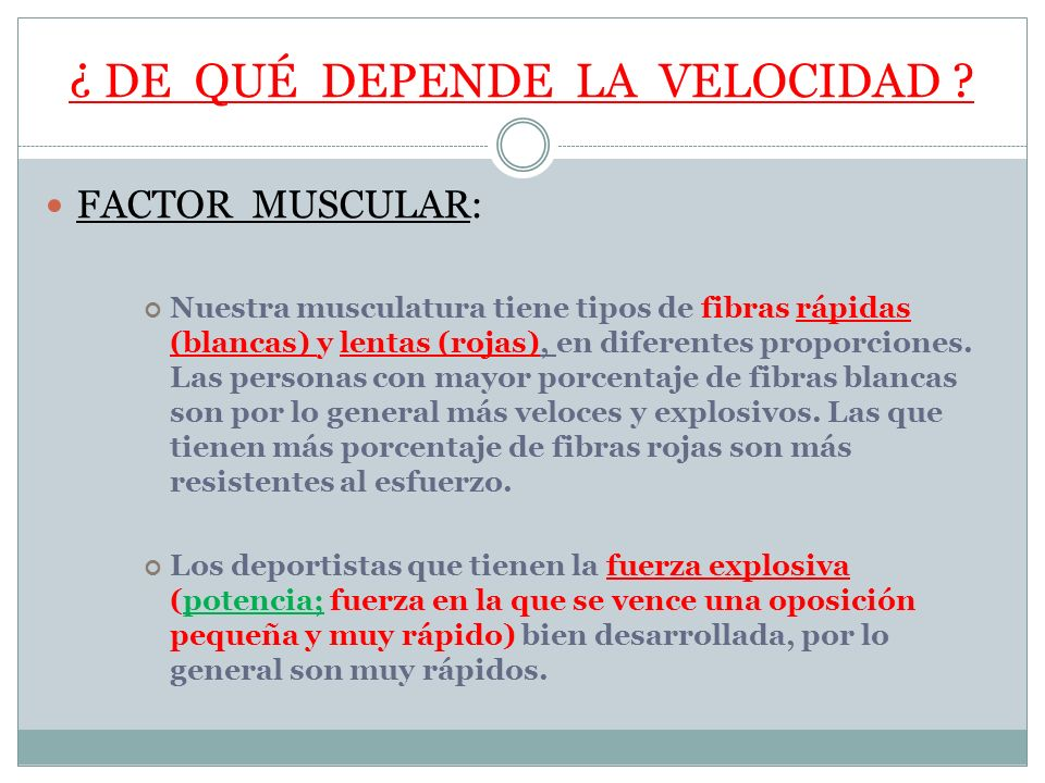 ¿ DE QUÉ DEPENDE LA VELOCIDAD ? FACTOR MUSCULAR: Nuestra musculatura tiene tipos de fibras rápidas (blancas) y lentas (rojas), en diferentes proporcio