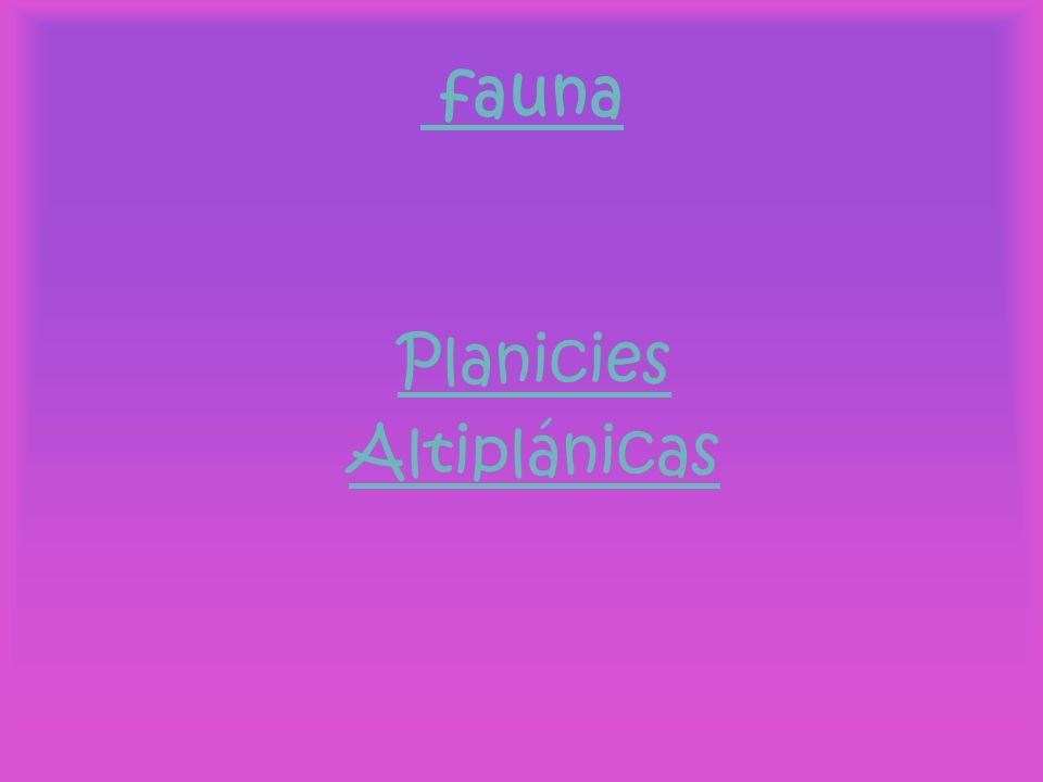 fauna Planicies Altiplánicas