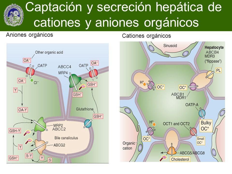 Aniones orgánicos Cationes orgánicos Captación y secreción hepática de cationes y aniones orgánicos ABCB1 ABCB4 ABCC4 ABCC2