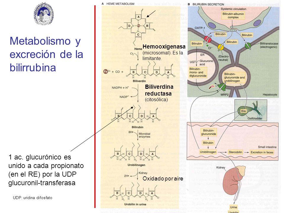 Metabolismo y excreción de la bilirrubina Hemooxigenasa (microsomal). Es la limitante. Biliverdina reductasa (citosólica) Oxidado por aire 1 ac. glucu