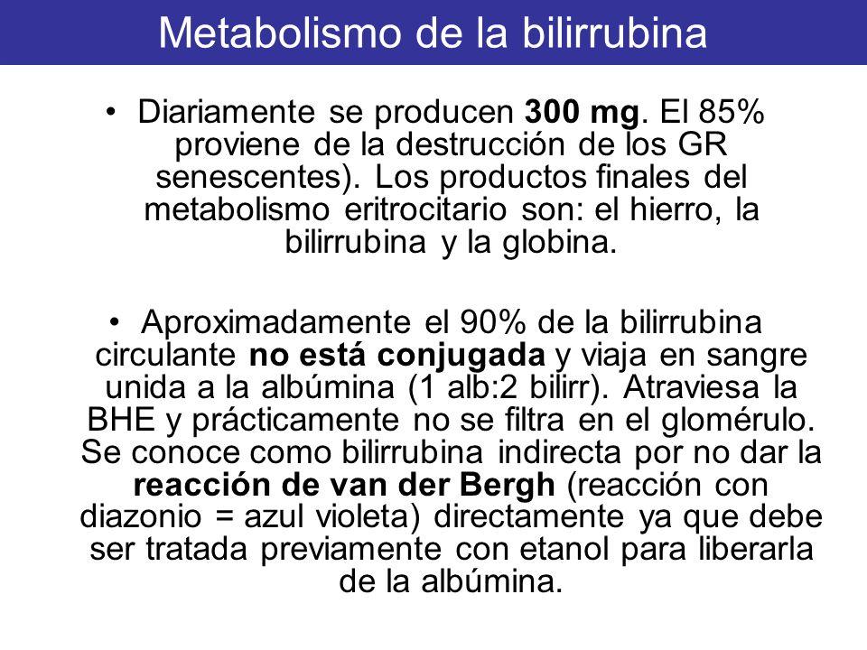 Metabolismo de la bilirrubina Diariamente se producen 300 mg. El 85% proviene de la destrucción de los GR senescentes). Los productos finales del meta