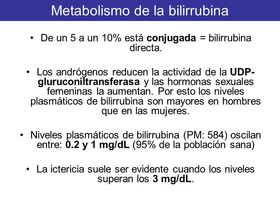 Metabolismo de la bilirrubina De un 5 a un 10% está conjugada = bilirrubina directa. Los andrógenos reducen la actividad de la UDP- gluruconiltransfer