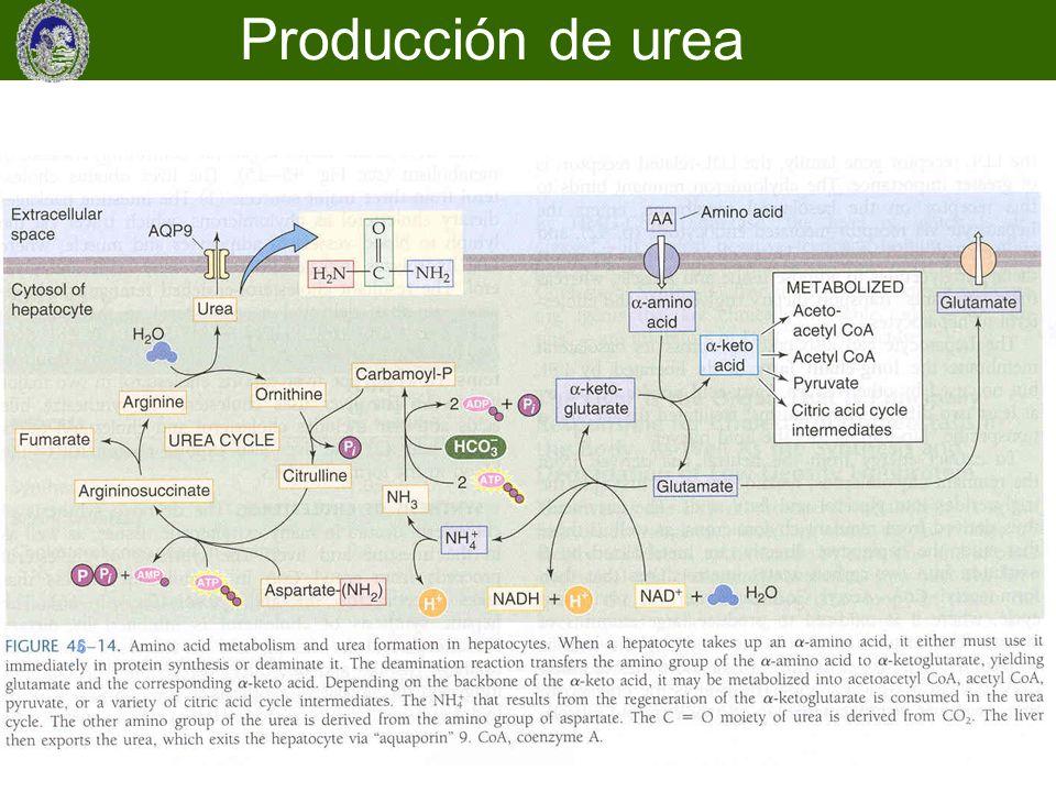 6 Producción de urea