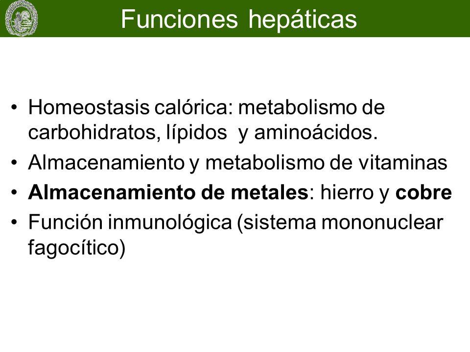 Homeostasis calórica: metabolismo de carbohidratos, lípidos y aminoácidos. Almacenamiento y metabolismo de vitaminas Almacenamiento de metales: hierro