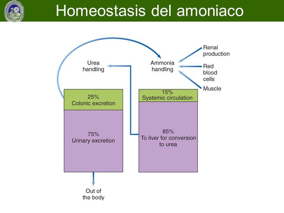 Homeostasis del amoniaco